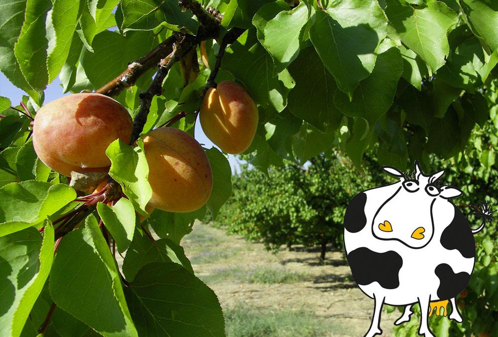 Somail fruits, Le goût de la coopération !